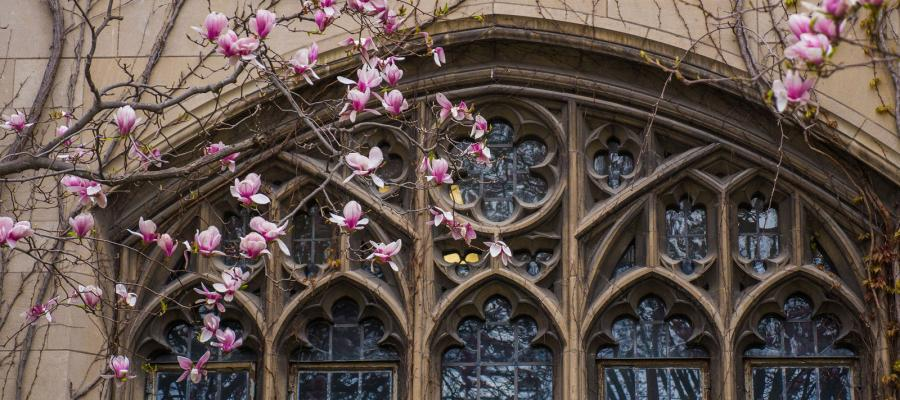 Pink flowers in front of gothic university windows